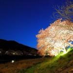 みなみの桜と菜の花祭り
