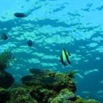 海中の魚(ヒリゾ浜)